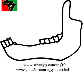 Lower jaw-bone of ox